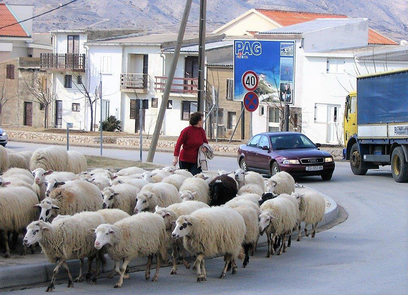 Disciplinirane sudionice u prometu.