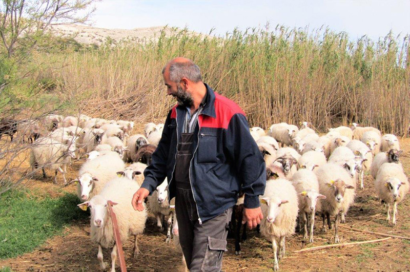 Poslušno stado za svojim pastirom.